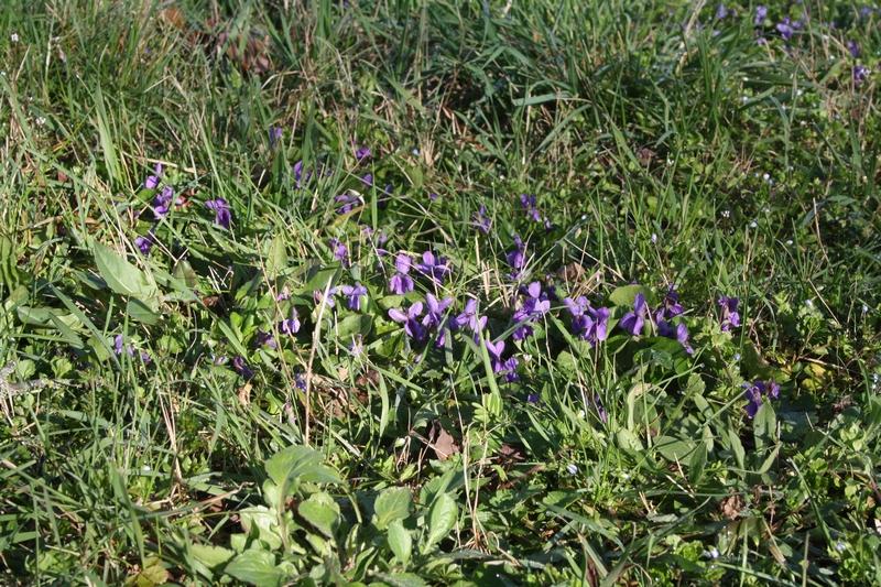 [Immagine: tn800_violette_1.JPG]