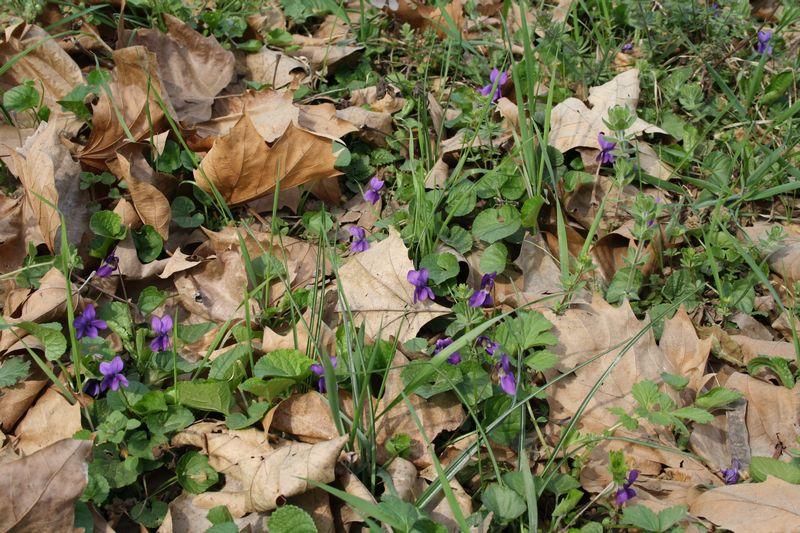 [Immagine: tn800_violette_alla_Bellaria.JPG]